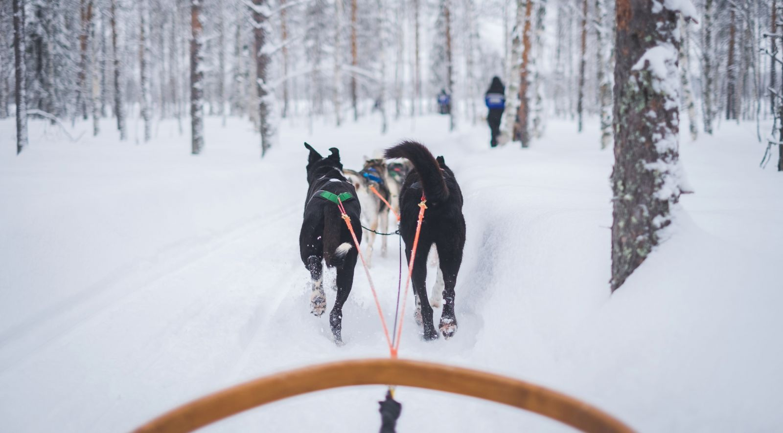 Murmansk Dog Sledding