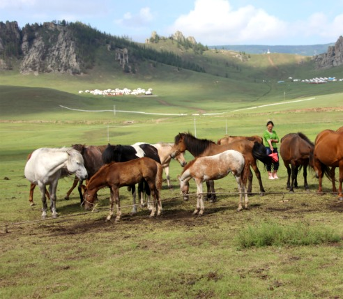 Mongolia Beautiful Horses