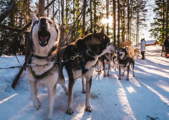Life Above the Arctic Circle: Things to Do in Murmansk